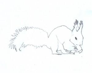 Skizze Eichhörnchen