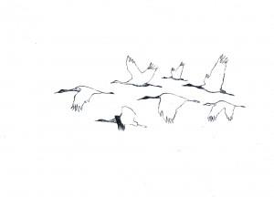 Skizzen von Kranichen in Flugformation